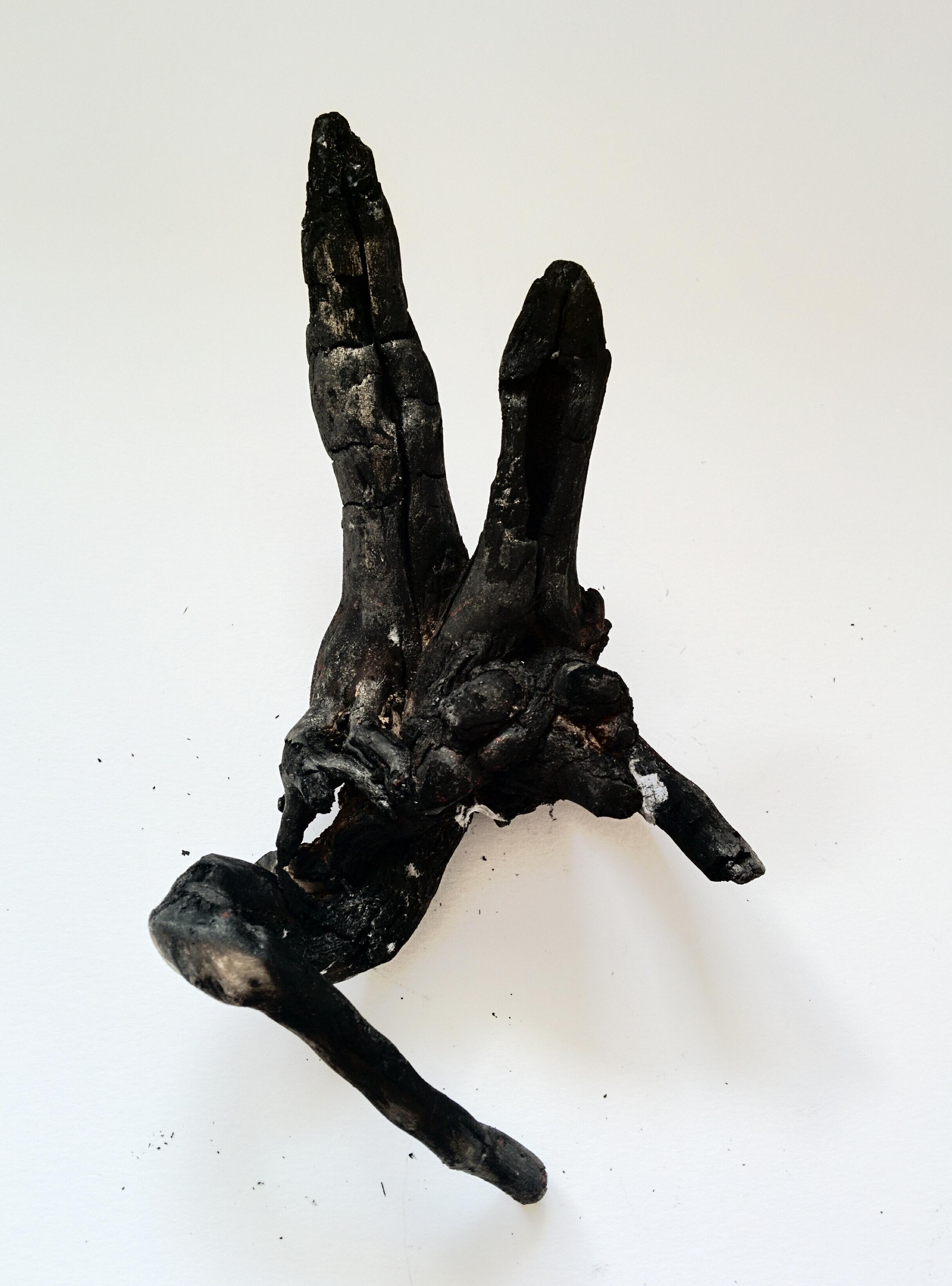 Drawing tool, burnt tree root